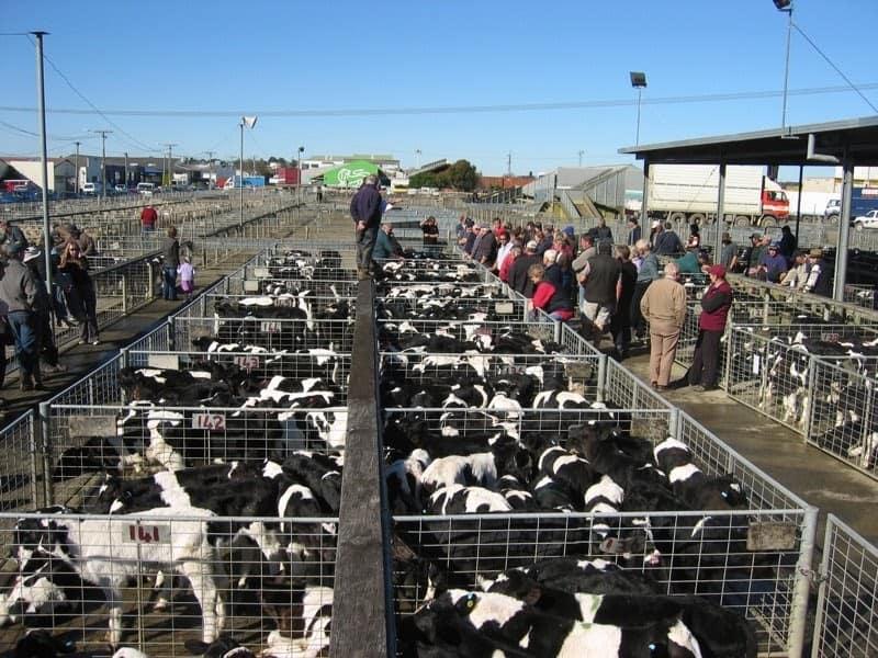Economics of Calf Rearing