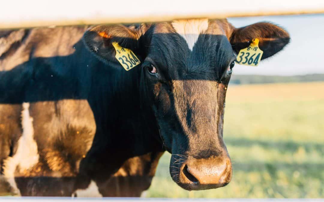 Dairy Farming animal nutrition