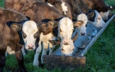 What makes sense for you – Vat milk, CMR or combination of the two?